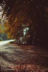 feeling the autumn warmth! (liakalampaka) Tags: autumn leaves trees fire fireplace warmth feelings colors warmcolors beautofulcolors beautifulplace canon canonphotography landscape