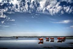 Dehesa de Abajo - La Puebla del Rio - Sevilla (mgarciac1965) Tags: dehesa marismas vacas agua reflejos azul blue cielo sky sevilla andalucía españa spain nikond5200