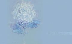 FloresPietMondrian_009 (Visualística) Tags: flores pietmondrian mondrian arte art interpretaciones abstracción paráfrasis versiones análisis flowers flower flor vegetal