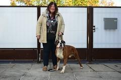 Hüvasti, tšempionid, järgmise korrani! (anuwintschalek) Tags: nikond7000 d7k 18140vr austria niederösterreich wienerneustadt kodu home koer hund dog boxer bokser 2016 sügis autumn herbst november gordon tiiu