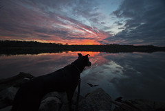 Doggie Sunset (Tiara Rae Photography) Tags: dog sunset puppy sky nebraska clouds colors pets animals