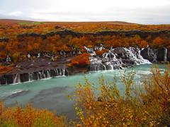 IMG_0547 (NapoleonIsNotDead) Tags: iceland islanda landscape nature summer waterfall ground trees orange colorful fall autumn salix