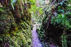 Rocky Mountain Way (Brian Travelling) Tags: scotland scenery scenic scottish scots gorge argyll argyllshire pucksglen path track pentaxkr pentax pentaxdal peaceful peace