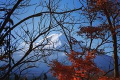 hide you (effispectrum) Tags: fuji fujisan mountain mount mountfuji montagne japon japan nihon nippon autumn automne fall leaves