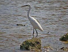 Qeshm Island , Persian Gulf (daniyal62) Tags: qeshm island iran birds eosm m eos canon efs 55250mm f456 is stm