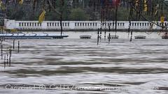 Torino (34) (cattazen.com) Tags: alluvione torino po esondazione parcodelvalentino murazzi pienadelpo cittditorino turin piemonte