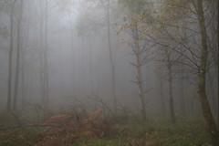 Foggy Exmoor Forest (tog@goldenhour) Tags: exmoor uk fog mist rain november woodland woods forest winter sonya7r hornerwoods landscape toggoldenhour