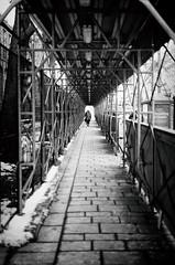 Wellington (DHaug) Tags: westblock parliamenthill parliamentaryprecinct overhead protection sidewalk streetphotography ottawa november 2016 xf35mmf14r xt2 fujifilm leadinglines explore explored