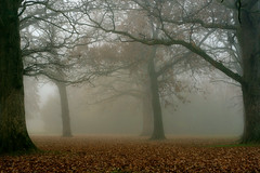 Embraced By Nature (Xaraz) Tags: nature fog trees november autumn embrace