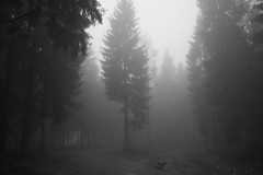 I don't care (Glupschmops (back soon)) Tags: outdoor nebel monochrome fog vapour mist eerie dog sombre sw wood blackandwhite woodscape wald forest woods