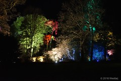 DSC04092 (Twareg) Tags: 2016 aboretum bpw enchanted forest westonbirt bathphotowalk gloucestershire england handheld night nightshot