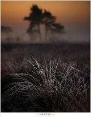 De eerste kleuren op een koude ochtend (nandOOnline) Tags: morning nature dauw landscape koud december landschap natuur ochtend mist schemering twilight nevel strabrecht vorst sunrise cold fog strabrechtseheide zonsopkomst frost mierlo nbrabant nederland