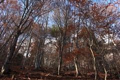 La Sarvaz (bulbocode909) Tags: valais suisse saillon lasarvaz forts nature arbres automne feuillages rouge bleu