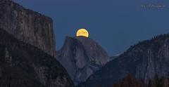 Supermoon Rising over Yosemite Valley... (markarlilly) Tags: yosemitevalley yosemite yosemitenationalpark halfdome elcapitan supermoon moon nikon500mm nikon california nationalparks