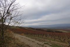 In den Weinbergen - Blick nach Bingen und ins Rheintal