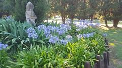 31 diciembre 2016 Parque Eva Hajduk (Diaz De Vivar Gustavo) Tags: flowers parque eva hajduk ranelagh diaz de vivar gustavo ranelenses buenos aires estacion