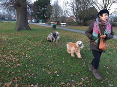 Chester with the luminous collar (jovike) Tags: animal dog enfield espe grass london park tree woman
