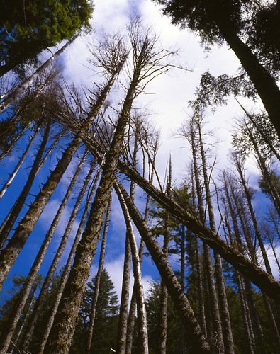 Forest Spears and Partial Blue Skies