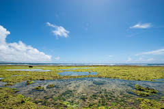 -Okinawa Japan (J.D Chen ) Tags: trip travel vacation japan island nikon tour  soba nippon okinawa backpacker f28 d800  1424