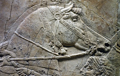 Lion Hunts of Ashurbanipal, king preparing for hunt (horse head) (profzucker) Tags: sculpture london art ancient iraq lion palace relief beginning britishmuseum gypsum tigris mosul hunt assyrian excavated ashurbanipal neoassyrian ninevah rassam 645bce