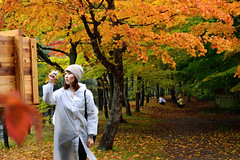 (Vincent_Ting) Tags: autumn fall leaves japan stream aomori  maples milky silky      oirase      northeastjapan oirasekeiryu   oirasekeiryuhotel vincentting