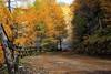 Herbst im Lärchenwald (mikiitaly) Tags: herbst elements südtirol wipptal sterzing eisacktal lärchenwald canonautumn slicesoftime bestcapturesaoi sailsevenseas elitegalleryaoi ruby15 ruby20