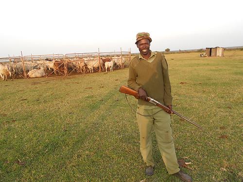Cattle night watchman