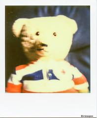 Teddy-(Bar) # Polaroid_PX70_Impossible- Polaroid SX70 (irisisopen *f/8* <2015> of the experience) Tags: film analog germany polaroid sx70 deutschland land motive farbe impossible sofortbild px70 sofortbildfilm