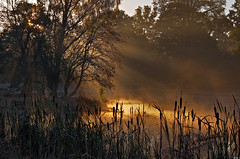 A Misty Morning at Dunham Massey (Chris Beesley) Tags: morning sun mist cold colour sunrise frost nt nationaltrust dunhammassey mistiness pentaxsmcda55300mm pentaxk5