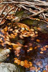 Otoo 2 (Jorge Pazos) Tags: parque espaa naturaleza color nature water rio del canon river hojas spain agua natural natura catalonia jorge otoo catalunya catalua autumm montseny espanya 2470mm28l pazos canonista canoneos7d