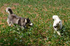 """Check Out Chase Sticking His Tongue Out At Zarro! • <a style=""""font-size:0.8em;"""" href=""""http://www.flickr.com/photos/96196263@N07/10984946003/"""" target=""""_blank"""">View on Flickr</a>"""