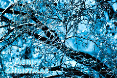 Merry Christmas (Light Echoes) Tags: fall nikon december merrychristmas d90 2013 icechristmas