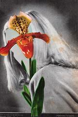 portretstudie (maartje jaquet) Tags: woman orchid flower collage paper wonder glue books scissors wonderwoman magazines orchidee papier vrouw boeken oldmagazines bloem oldbooks schaar wonderwomen lijm tijdschriften fatalflower
