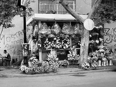 04_Cairo - Flower Shop (usbpanasonic) Tags: muslim islam egypt culture nile cairo nil flowershop egypte islamic  caire moslem egyptians egyptiens