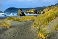 14.1.2FootstepsIntoAMoment 005 (thewiz2011) Tags: ocean seascape water landscape nikon grasses 18200mm d7k d7000
