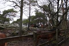 Pferde im Slottskogen
