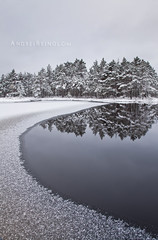 Open water (Andrei Reinol) Tags: park morning trees winter light sky bw plants white lake snow cold detail reflection tree ice nature water silhouette vertical horizontal forest landscape outdoors photography mirror frozen europe exposure frost estonia day view outdoor pastel atmosphere nopeople baltic fresh adventure clear silence swamp land nordic moor bog cristal northen andrei lahemaa beautifulnature beautifullandscape snowdunes nationial leefilter krvemaa balticlandscape estonianlandscape absolutelystunningscapes europeanlandscape sururaba reinol andreireinol
