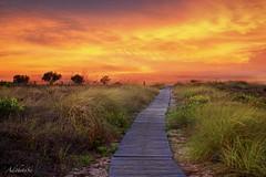 Moments... full of colors! (AdithetoS) Tags: sunset summer sky nature colors landscape nikon warm path hellas kos greece greens nikkor d800 50mmf18 dodekanisa kosisland nikond800 adithetos vision:sunset=099 vision:outdoor=099 vision:ocean=0748 vision:sky=0983 vision:car=0901 vision:clouds=0737 vision:wilderness=0848 vision:water=0768 vision:city=0796 vision:building=0508