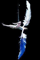 Cirque Du Soleil's Varekai - Icarus (Haddadios) Tags: ontario canada silhouette ed soleil nikon university theatre hamilton performance du ii coliseum icarus nikkor cirque vr mcmaster d800 varekai 70200mm copps f28g