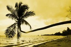 Palm Tree on idyllic Beach (Thailand 204) (tobfl) Tags: sunset tree beach thailand palm lonely idyllic