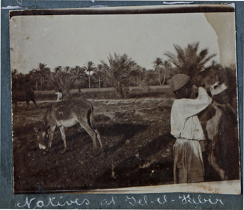 album palestine photograph wallace ww1 greatwar anzac sergeant illawarra gerringong sharpe kiamalibrary 6thlighthorse 16threinforcement