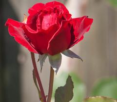 _5160296.jpg (BRivey) Tags: flowers yard florida palmcoast