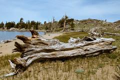 Hike to Lake Winnemucca (Kevin Cortopassi) Tags: california wood trees plants lake snow mountains tree nature rock carson walking rocks open hiking pass tahoe sierra trail fitness winnemucca