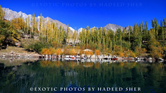 Lake Upper Kachura (C@MARADERIE) Tags: autumn pakistan sky lake color reflection nature water landscape colorful natural nopeople naturism colorimage skardu kachura upperkachura skarduvalley lakeofpakistan lakesofpakistan lakeupperkachura naturismphotography