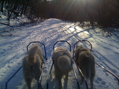 "Czar, Princess, and Hudson MUSHing As The Sunsets • <a style=""font-size:0.8em;"" href=""http://www.flickr.com/photos/96196263@N07/14553486302/"" target=""_blank"">View on Flickr</a>"