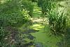 Niederrhein (rotraud_71) Tags: plants sun germany shadows nrw duckweed stadtgraben niederrhein wachtendonk vanagram blinkagain