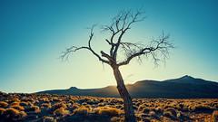Vigil (Middle aged Nikonite) Tags: tree dead desert landscape highlight nikon d7200 desolation brush contrast nevada