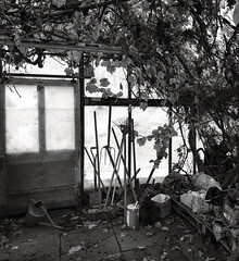 Glasshouse Interior 2 B&W ** (CactusD) Tags: greenhouse glasshouse horticulture gardening landscape england nikon d800e fx texture uk unitedkingdom gb 24mmf35pce 24pce 24mm f35 pce tiltshift blackandwhite bw monochrome tilt shift mtsub