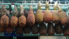 Abacaxis  // Pineapple (Parchen) Tags: foto fotografia imagem alimento comida registro fruto frutos comestíveis venda vendendo mostrando mostruário exposição parchen carlosparchen cor cores textura abacaxi abacaxis ananás ananascomosus nomecientífico