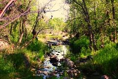 Seven Springs, AZ (Paige_Terhune) Tags: follow first comment like trees tree landscape river creek nature arizona az sevensprings